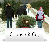 Christmas Tree Choose and Cut Valle Crucis Mountains North Carolina
